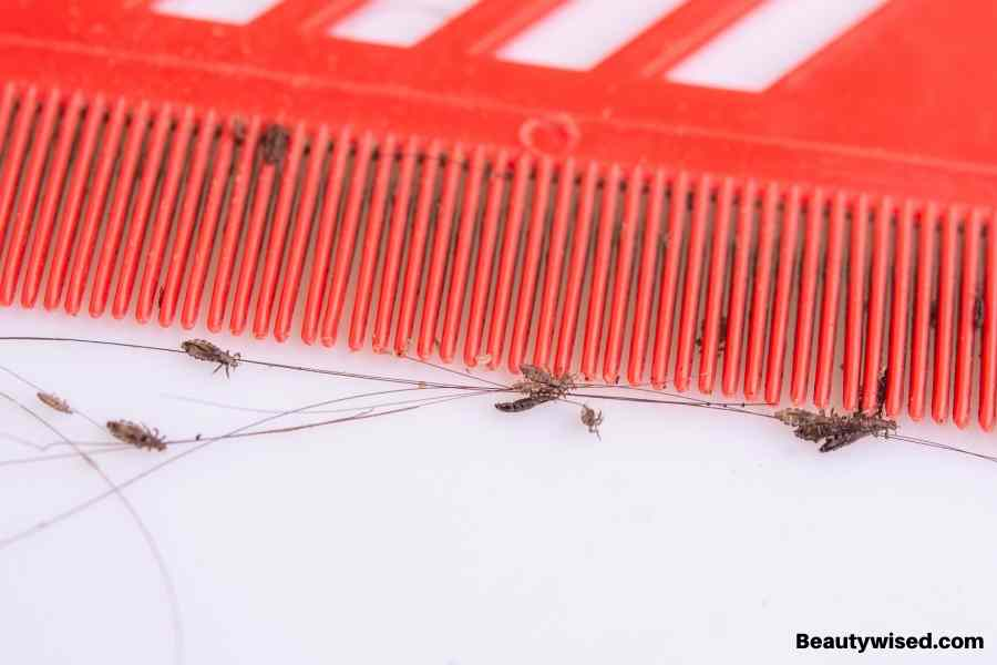 wet combing for lice treatment